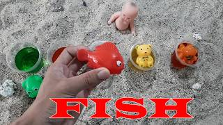 Find And Bathing Animal Toys With Water Colors  Part 1| Learn Colors For Kids | Diy For Kids