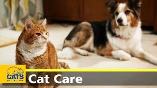 How to introduce cats to dogs