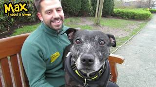 Dogs Trust Manchester - Max