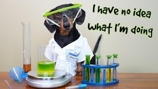 Funny Chemistry Dog! - with Oakley the Funny Dachshund!