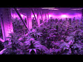 High Density Cultivation with SoHum Living Soils & AutoPot at The Grove