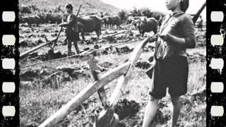 ĐƯA CƠM CHO MẸ ĐI CÀY 1971