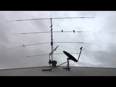 Kookaburras on Radio Antenna