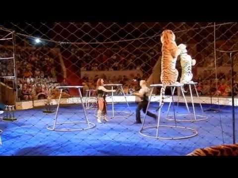 Уфимский цирк - YouTube