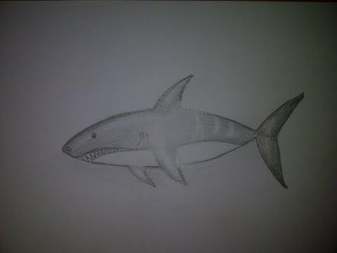Видео как нарисовать акулу карандашом поэтапно