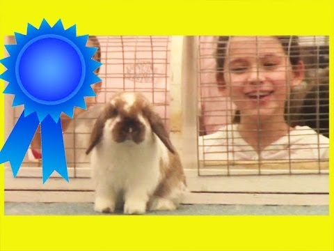 ANGEL'S FIRST BUNNY SHOW!  |  KITTIESMAMA