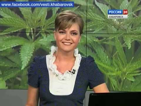 Вести-Хабаровск. Чудо-трава
