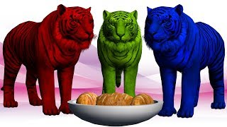 Learn Colours with Tiger and Song for Kids || Animals Colors & Names For Children's