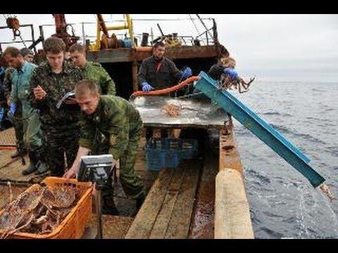 Пираты в Охотском море.Браконьерство на Дальнем Востоке