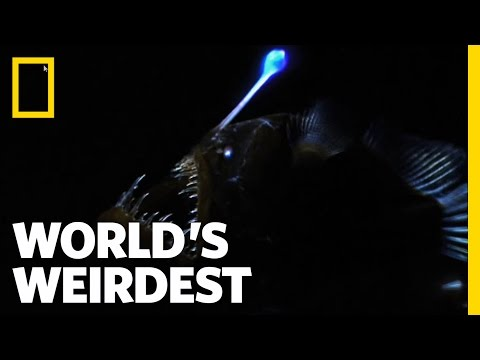 World's Weirdest - Weird Killer of the Deep