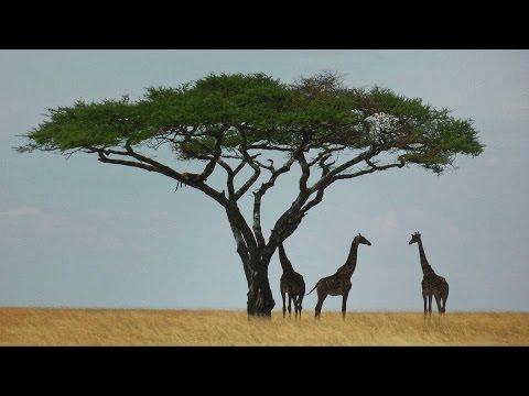 Serengeti, in Tanzania