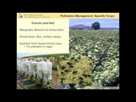 Pollinator Conservation Strategies for Organic Seed Producers (Eric Mader)