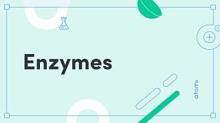 HSC Biology - Enzymes