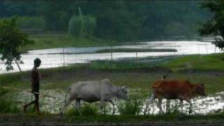 O Amar Bangla Ma Tor || Fahmida Nabi