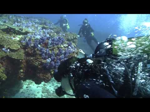 All Out Africa - Marine programs: Tofo, Mozambique (Jan/Feb 2015)