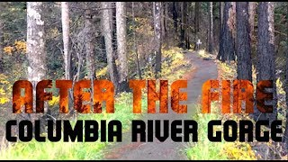 Gone Travelin' V: After the fire in the Columbia Gorge