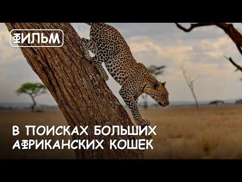 Мир Приключений - Фильм: В поисках Больших Африканских кошек. Серенгети. Масай Мара. Нгоронгоро.