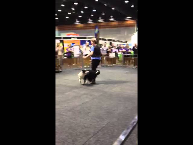 Dancing with dogs at PIAA Pet Expo