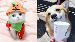 OMG! - Funny and Cute Dog and Cat Compilation 2020