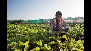 How Can Surging Youth Populations Transform Global Food Security?