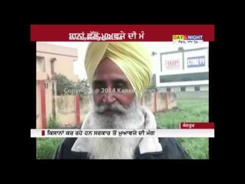 Heavy rains damage crops in Punjab | Sangrur