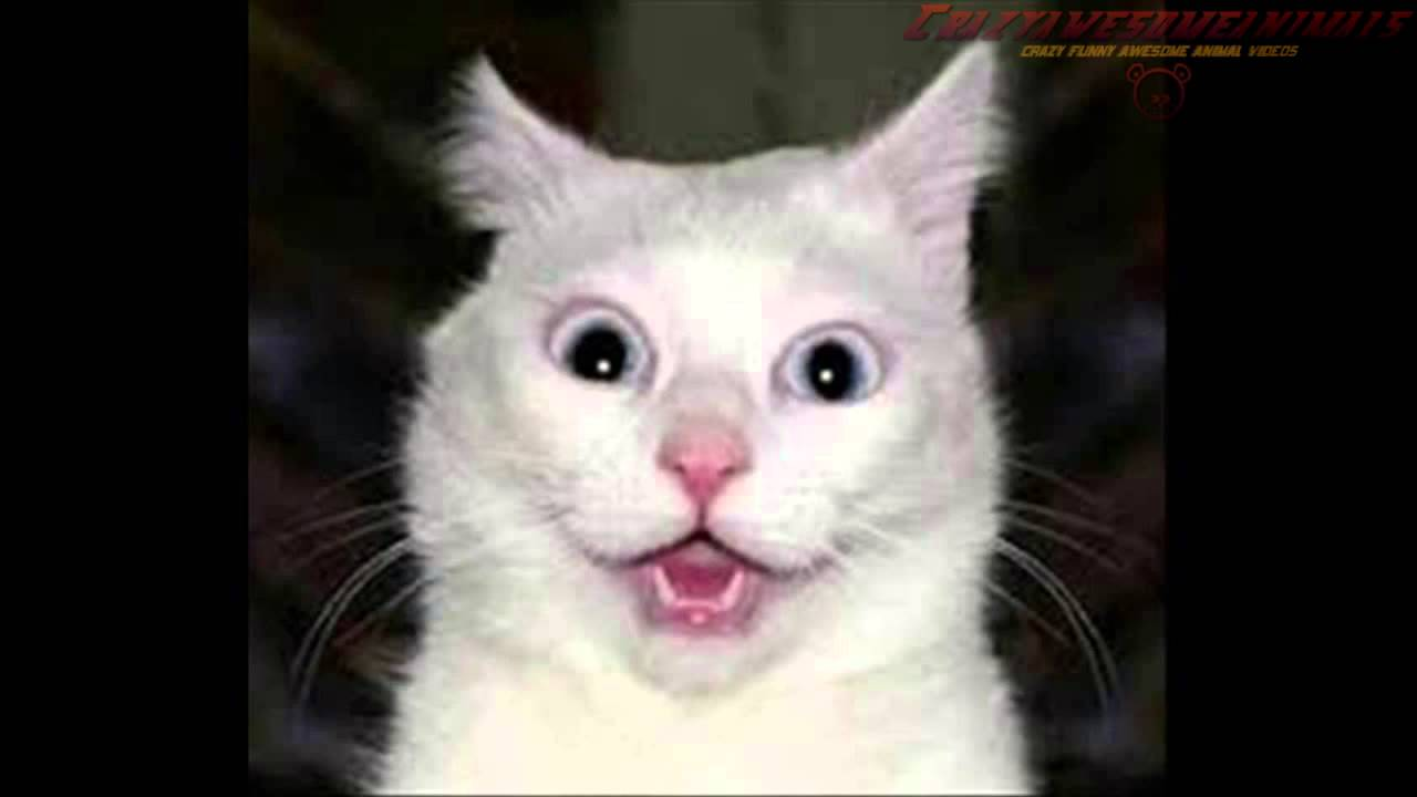 Surprised Cats Youtube