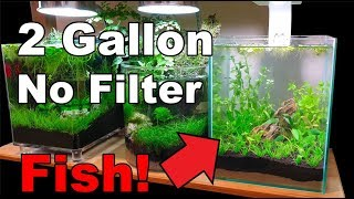 2 gallon - Episode 2 || Fish Added (How To: No Filter No Heater No Ferts  No co2)