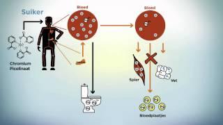 wat is een immuunsysteem