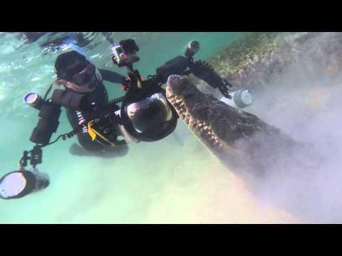 Swimming With Crocodiles video