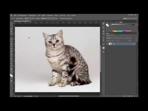 Как сделать белый фон на фотографии в фотошопе cc