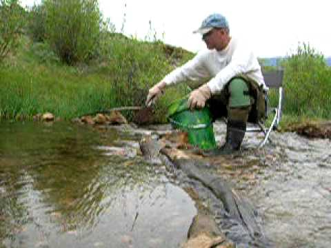 Gold Prospecting Cache Creek, Colorado -- Sluicing For Gold