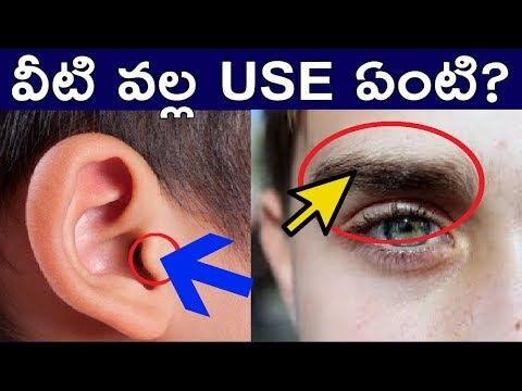 YOU DONT KNOW ABOUT HOW AMAZING YOUR BODY AND BRAIN IN TELUGUFACTS 4U