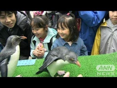 【地震】被災地の動物園と水族館再開 子供に笑顔(11/04/23)