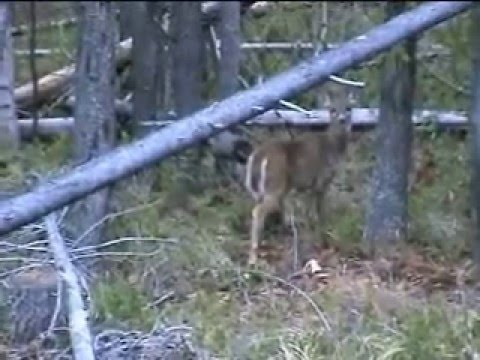 Whitetail Hunt 2007 Video