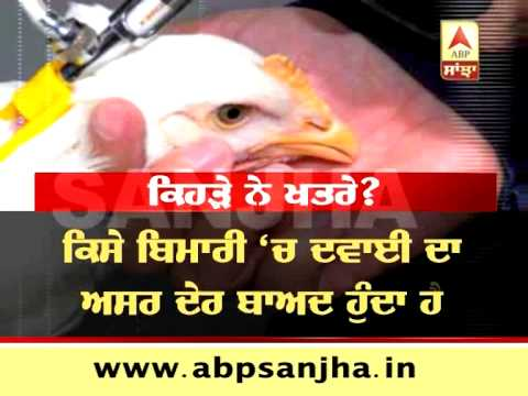 ABP SANJHA SPECIAL: How Antibiotics in chicken meat can affect your body?