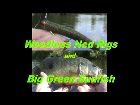 """In this mid-July 2017 float tube adventure, a new rigging method that made 2.5"""" Z-Man ZinkerZ both weedless - and employed a larger, 1/0 hook vs the 'normal' size #1 hook was used. Both the..."""