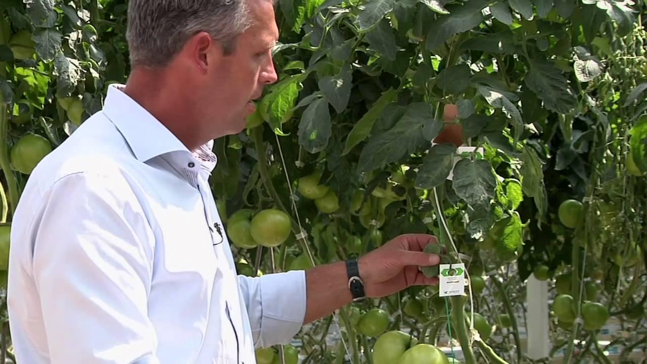 Biological Control of Pests Biological Control of