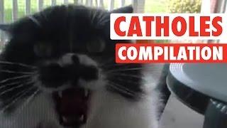 マジ怒ってんだぞ!?と本気で怒りまくる猫たち