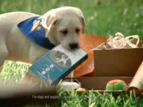 Cute Puppy Commercial