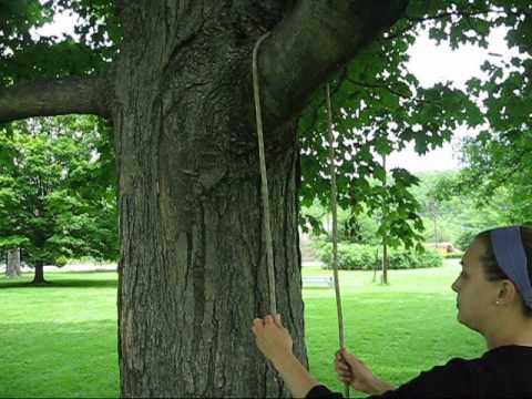 Tree Climbing: Useful Knots