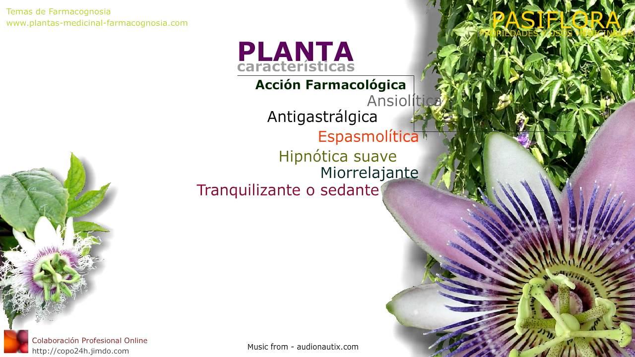 Pasiflora propiedades y beneficios de la planta maracuy for Planta decorativa con propiedades medicinales