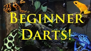 Best Beginner Dart Frogs!