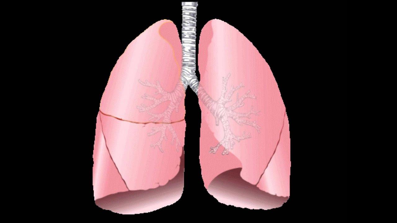 Лечение туберкулеза в домашних условиях у взрослых: как