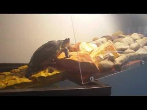 Cool Turtle Tank Setup - YouTube