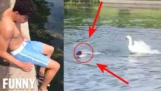 TEEN GETS ATTACKED BY SWAN