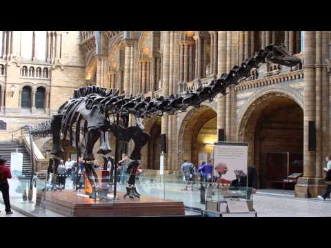 Natural history museum London City London