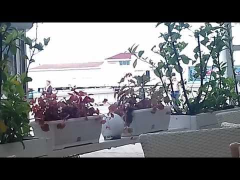 Крым 2017/Что бесит меня в крымчанах/Ялта 2017