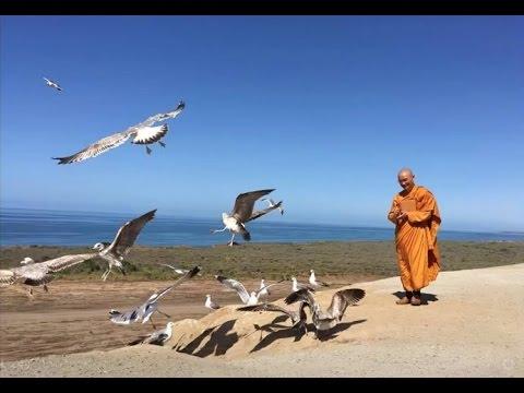 Hỏi Đáp: Kinh Đoạn Giảm - Thiền định - Thần thông - Rải tâm từ - Tâm diệt