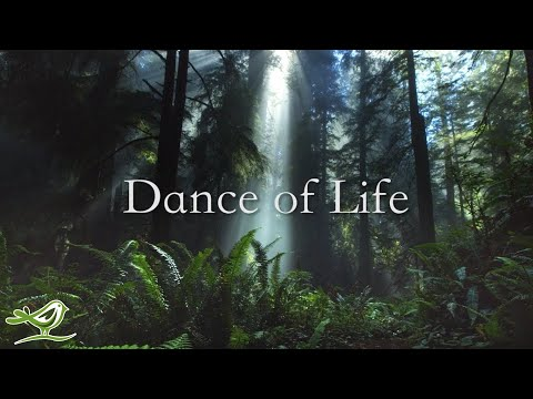 Download Dance of Life - Available Now!