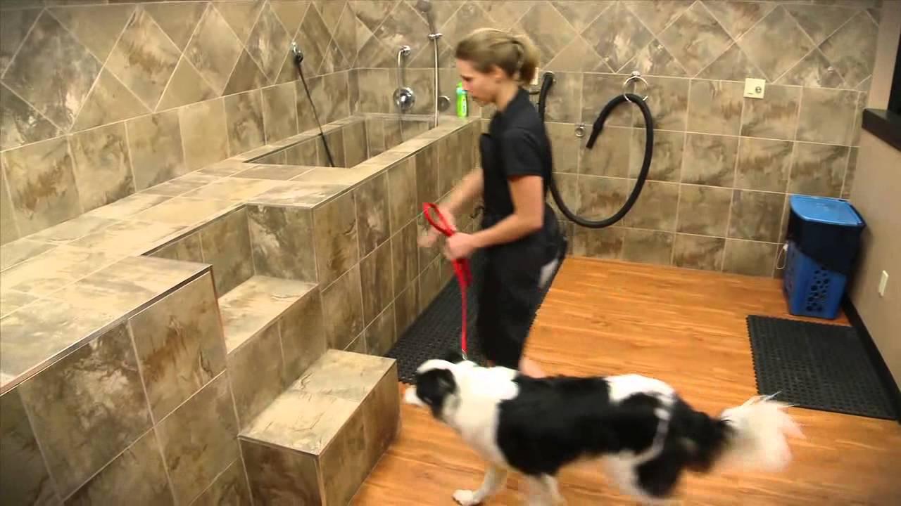 Pet Valus Dog Wash YouTube